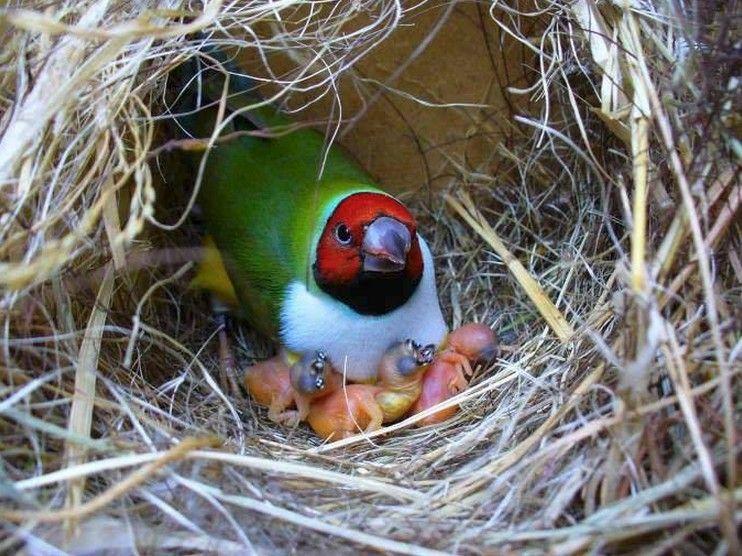 Comment débuter la saison de reproduction ? – MyBirds